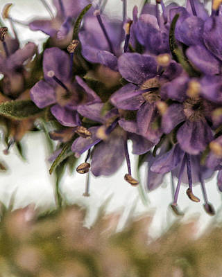 Floral Digital Art Digital Art Photograph - Life Goes On by Bonnie Bruno