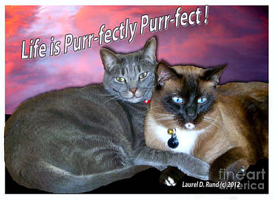 Life Is Purrfectly Purrfect Art Print