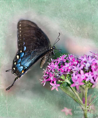Pipevine Swallowtail Butterfly Photograph - Life Is Sweet by Betty LaRue