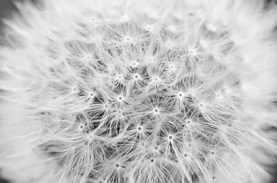 Photograph - Life Of A Seed by Margaret Pitcher
