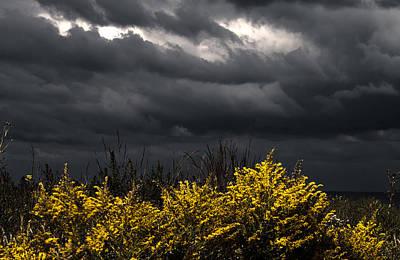 Photograph - Light And Dark by Milena Ilieva
