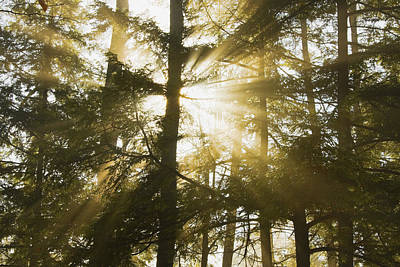 Photograph - Light Beams Shining Through Trees And Fog by Keith Webber Jr