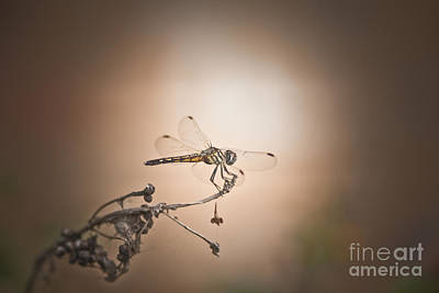 Mixed Media - Light On Dragonfly by Kim Henderson