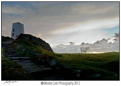 Photograph - Lighthouse And Horse by Beverly Cash