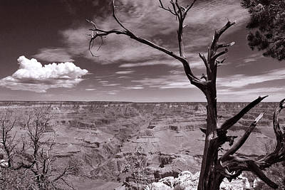 Lightning Striking Tree Of The Grand Canyon Original by Cedric Darrigrand