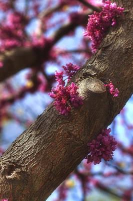 Lilac Photograph - Lilac Bark by Joann Vitali