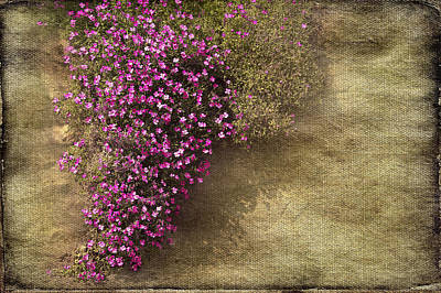 Lilac Branch Art Print by Svetlana Sewell