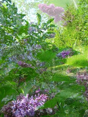 Lilac Photograph - Lilac In The Air by Shirley Sirois