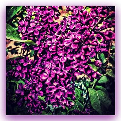 Fineart Photograph - Lilac Intensity by Paul Cutright