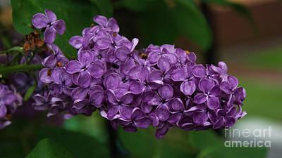 Photograph - Lilac by Mareko Marciniak