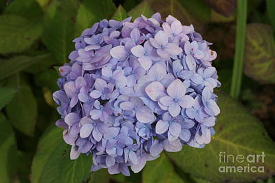 Photograph - Lilac by Michael Waters