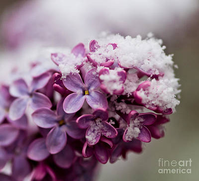 Easter Bunny - Lilacs by Mitch Shindelbower