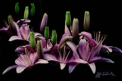 Lilies At Midnight Art Print by John Selmer Sr