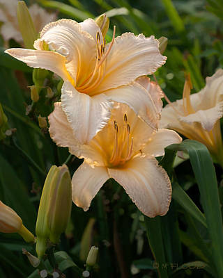 Photograph - Lilies In A Beautiful Shade Of Peach by Michael Flood