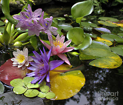 Purple Hydrangeas Photograph - Lilies No. 7 by Anne Klar