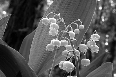 Photograph - Lilies-of-the-valley 3 by Roger Soule