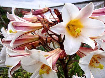 Photograph - Lilies by Roberto Alamino