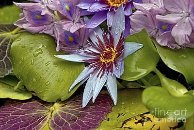 Lillies No. 9 Art Print