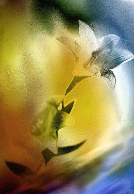 Lilly Art Print by Mauro Celotti