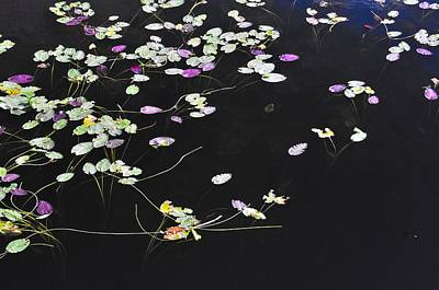 Photograph - Lilly Pads by Andres LaBrada