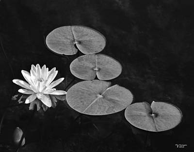 Photograph - Lilly Pads In The Pond by Peg Runyan