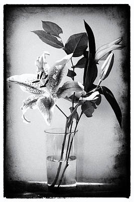 Lily 320bw Art Print by James Bethanis