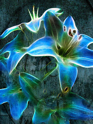 Photograph - Lily Blue by Fiona Messenger