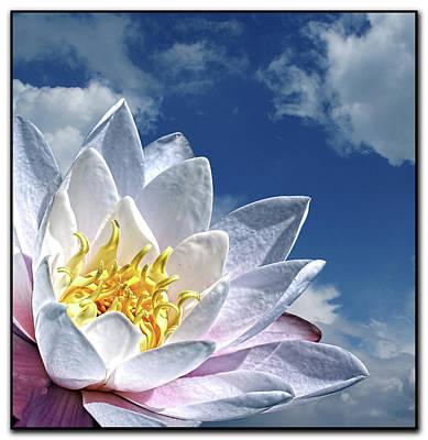 Lily Flower Against Sky Art Print by Photo by Daveduke.