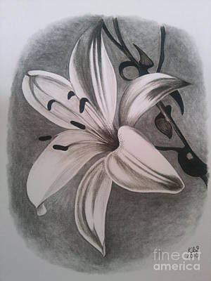 Lily Drawing By Kathryn Sharkey