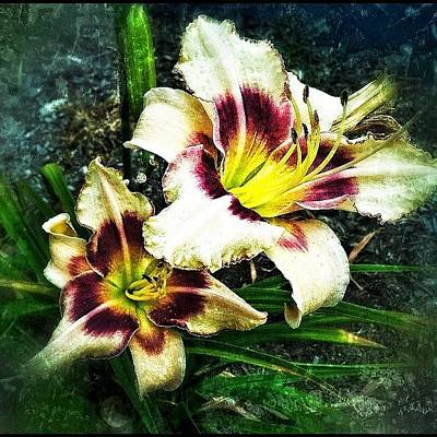 Abstract Flowers Wall Art - Photograph - Lily by Michelle Behnken