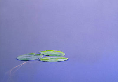Lily Pad Leaves On Winchell Lake Art Print by Darwin Wiggett