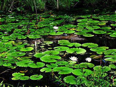 Photograph - Lily Pad Turtle Camo by Ms Judi