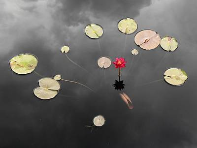 Photograph - Lily Pads And Lotus On A Stormy Day by Scott Rackers