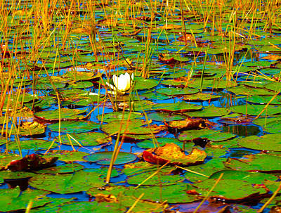 Photograph - Lily Pads Ardent by Katherine Huck Fernie Howard