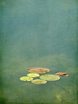 Y120831 Photograph - Lily Pads by Francois Dion