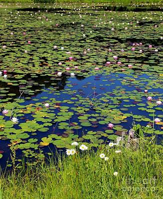 Dragonflys Photograph - Lily Pads In May by Pauline Ross