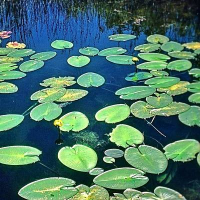 Marsh Photograph - Lily Pads #lakeontario #ontario #canada by Shelley Walsh