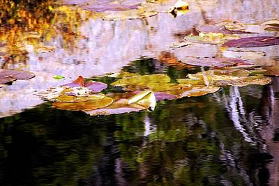 Photograph - Lily Pads On The Pond by Michael Courtney
