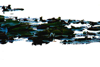 Water Photograph - Lily Pads On White Water by Marie Jamieson