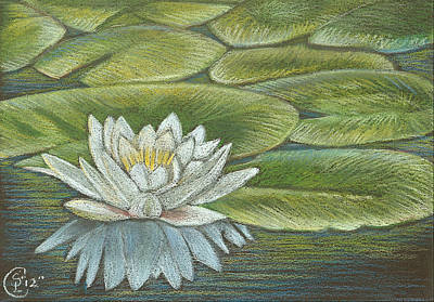 Lily Pads Art Print by Stephanie L Carr