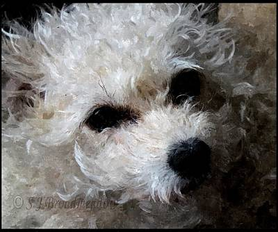 Watercolor Pet Portraits Photograph - Lily by Sarah Broadmeadow-Thomas