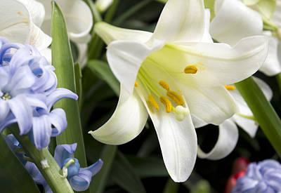 Flower Gardens Photograph - Lily Splendor by Peter Chilelli
