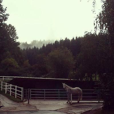 Limace #pferd #horse #forest #nebel Art Print