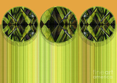 Lime Delight Print by Ann Powell