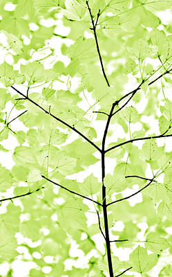 Photograph - Lime Green Leaves Melody by Jennie Marie Schell