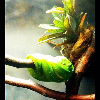 Reptiles Wall Art - Photograph - Lincoln Park Zoo by Michelle Behnken