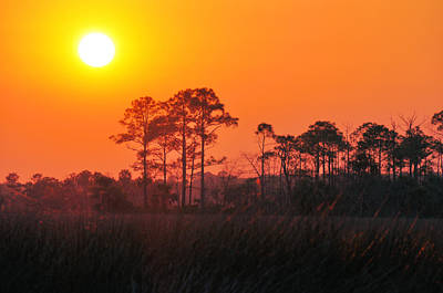 Photograph - Lingering Golden Sunlight by Jan Amiss Photography