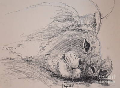 Drawing - Lion Cub by Paige Hval