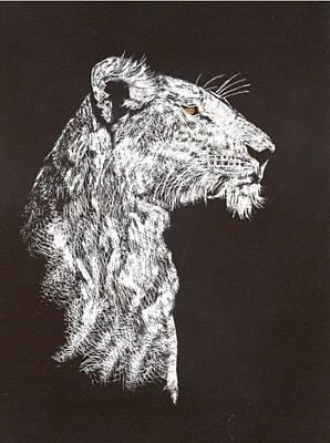 Drawing - Lion by John Brisson