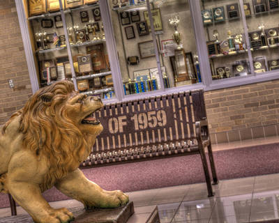 Photograph - Lion Lobby by Coby Cooper